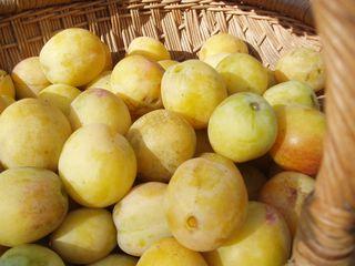 Golden plums
