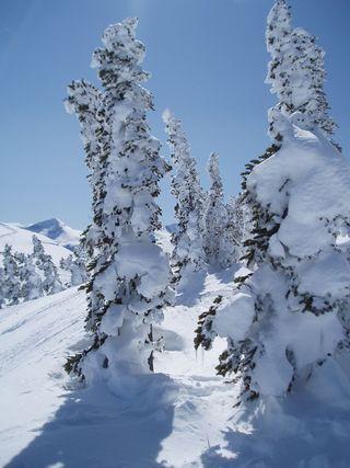 Snowscape whistler 2012