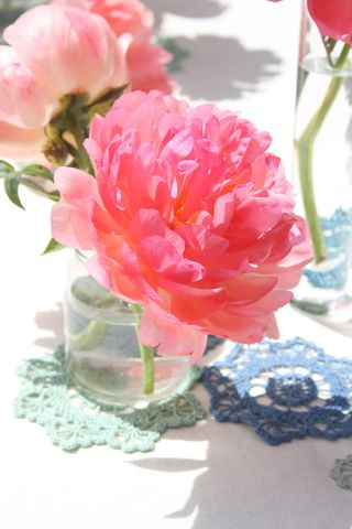 Peony close up