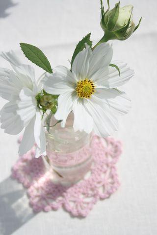 White on pink