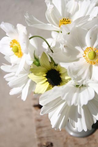 Sunflower & cosmos