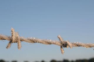 Nature's tinsel