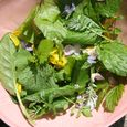 Foraged salad